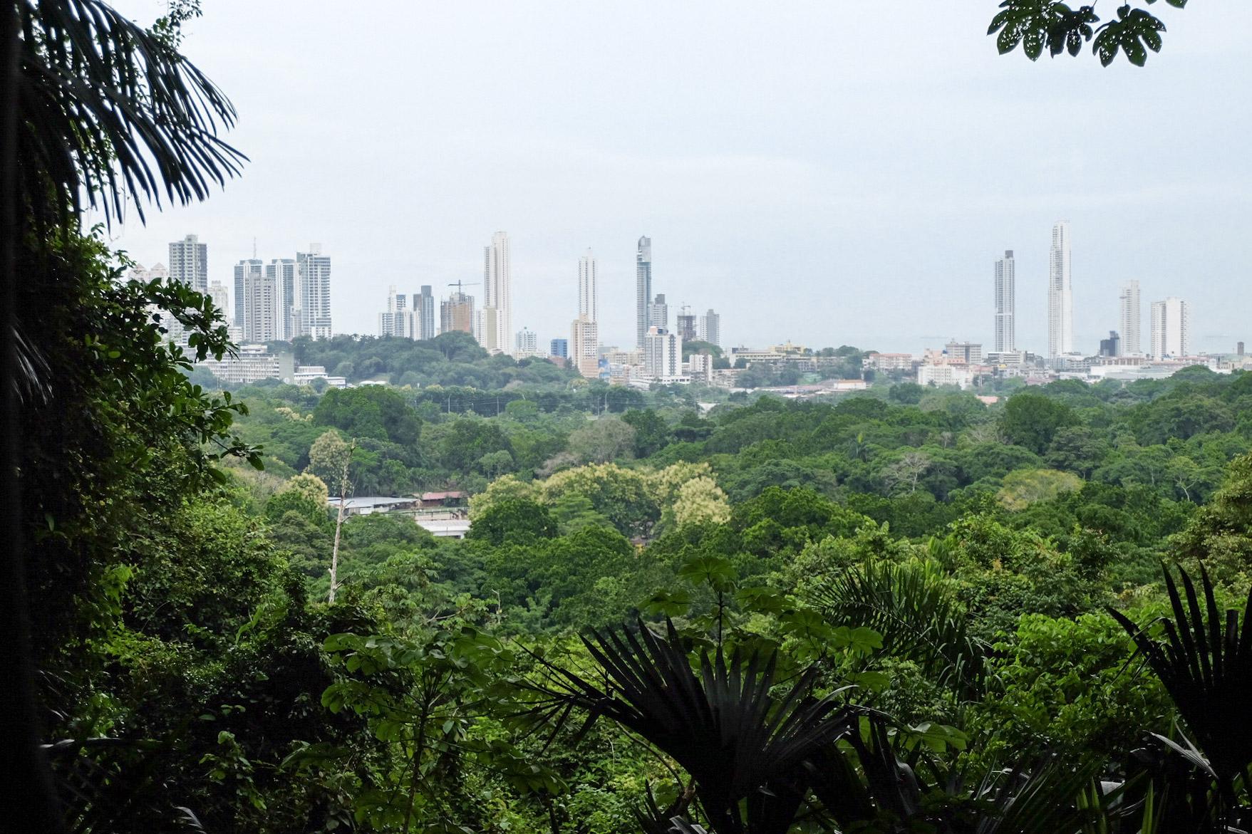 lego city jungle bewaker van de spin